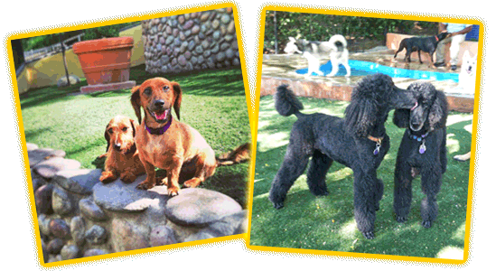 pacific palisades puppy dog training