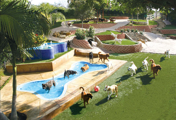 About canyon view ranch for dogs in topanga canyon for Dog boarding places near me