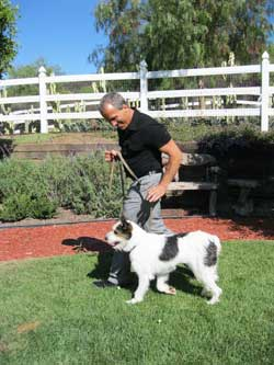 Doggy daycare at canyon view ranch in topanga canyon for Dog boarding santa monica