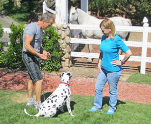 Personalized Dog Training